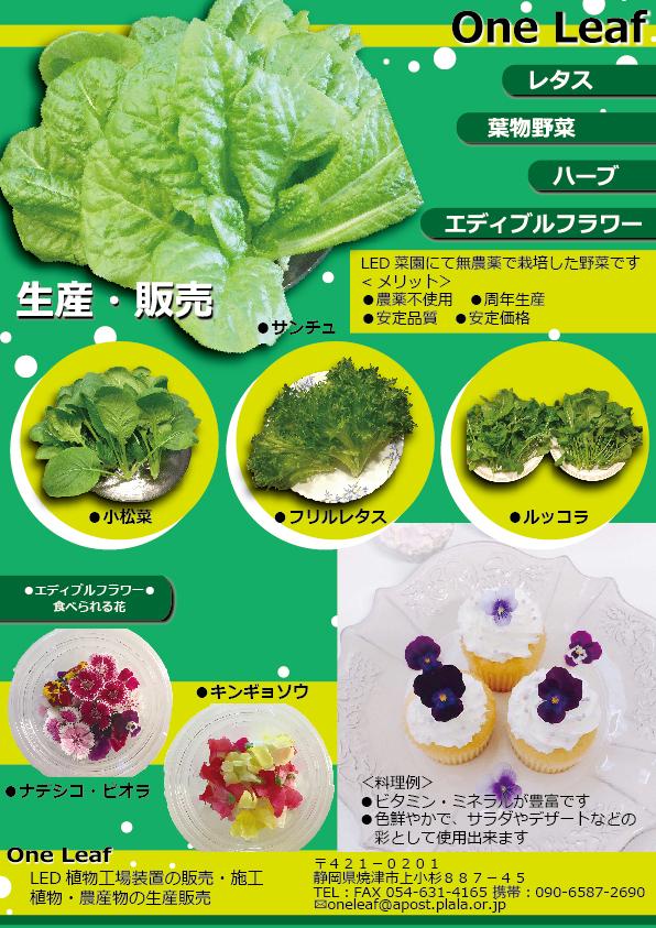 One-Leafチラシ